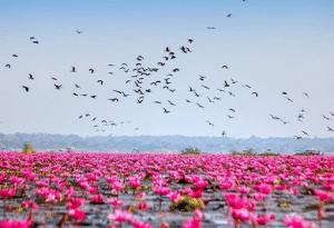 สถานที่ท่องเที่ยวในไทย ภาคตะวันออกเฉียงเหนือ หรือเรียกอีกอย่างว่า ภาคอีสาน ที่จังหวัดอุดรธานี